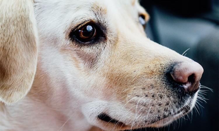 Hund - Vem ska ta hand om mig?